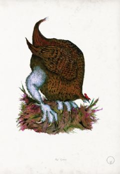 Red Grouse - artist signed print